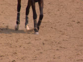 Stock Video Footage of A jogging horse at equestrian center
