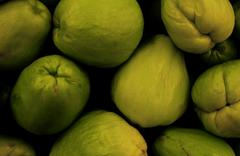 The Chayote Gathering Stock Photos