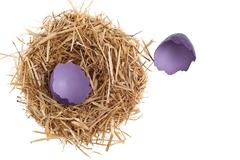 Straw nest with broken chicken eggshell Stock Photos