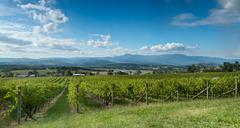View of the yarra valley, near melbourne, australia Stock Photos