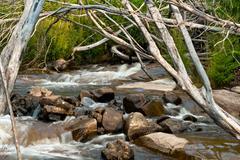 stevenson falls in the yarra valley, near melbourne - stock photo