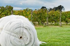 roll of cover net to protect ripe grapes - stock photo