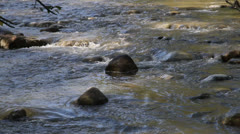 Stock Video Footage of Salmon swimming up and down rocky creek. HD 1080p 24fps.