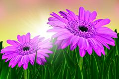 Colorful daisy gerbera flowers in a field  at sunrise Stock Photos