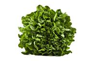 Stock Photo of a head of butter lettuce on white background
