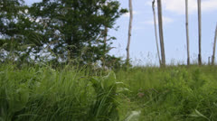 Boy running off into distance in grassy field. HD 1080p 24fps. Stock Footage