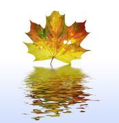 Autum leaf Stock Photos