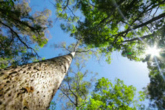 Stock Video Footage of Tree trunk timelapse