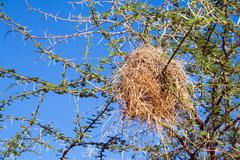 bird nest of weaver - stock photo
