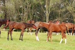Herd of horses ranch scene Stock Photos