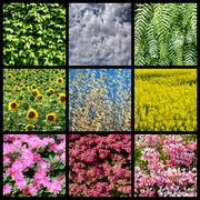 Mosaic photos of plants and flowers Stock Photos