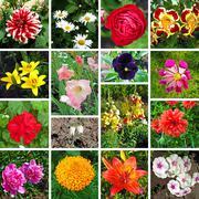 floral collage - stock illustration