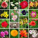 Stock Illustration of floral collage