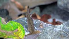 Blue butterfly open his wings in slow motion Stock Footage