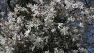 Pretty spring tree Stock Footage