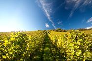 Vineyard in germany Stock Photos