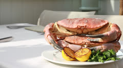 Stock Video Footage of cooked crab