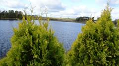 Thuja evergreen bush plant closeup ripple lake water background Stock Footage