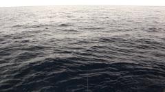 Sailfish Catch in Hawaii Stock Footage