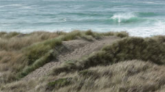 Grass sand dunes wind blow Pacific Ocean beach HD 5853 Stock Footage