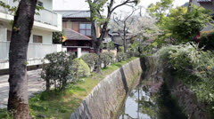 The Philosopher's Walk in spring season with cherry-tree blossom, Kyoto, Japan Stock Footage