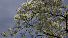 signs of spring - stock footage