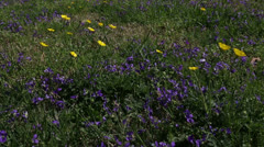 Purple and yellow spring Stock Footage