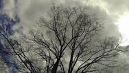 Stock Video Footage of Tree and Clouds Time Lapse