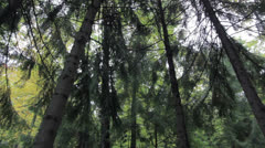 tall trees - stock footage