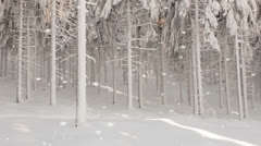 Falling snowflakes in a winter forest Stock Footage