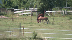 Hungry Horses Stock Footage