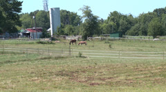 Hungry Horses wide push in Stock Footage