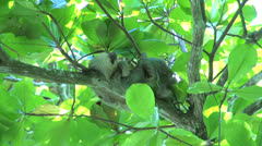 Sloth waking up and moves his hand Stock Footage