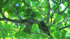 Sloth in a tree Stock Footage