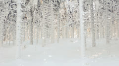 Inside a pine forest during a winter blizzard Stock Footage