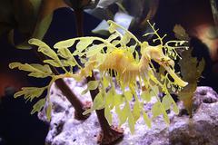Dragon fish Stock Photos