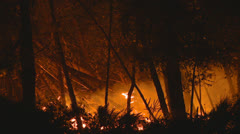 Forest fire at night Stock Footage