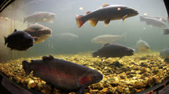 Large fish in a fish tank Stock Footage