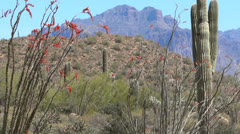 Superstition Mountain View with Ocotillo Stock Footage