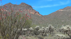 Mountain View with Cholla and Ocotillo in Arizona Stock Footage