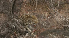 HDV Wildlife 02 Sequence 125 - stock footage