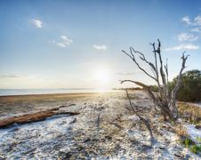 Merritt Island Wildlife Refuge - stock photo