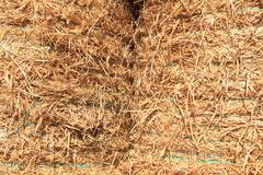 Dry hay binded together Stock Photos