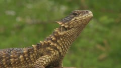 HDV Wildlife 02 Sequence 21 - stock footage