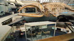 Natural History Museum exhibits. London. Stock Footage