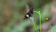 Stock Video Footage of Butterfly and flower grass