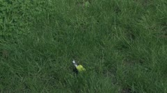 Dead Yellow Bird 30P Stock Footage