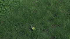 Dead Yellow Bird 30P Stock Footage