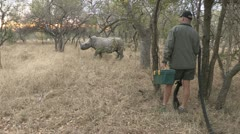 rhino been darted - stock footage