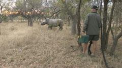 Rhino been darted Stock Footage